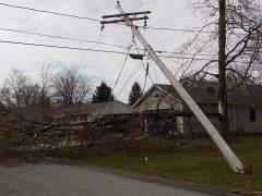 High winds took down trees and power lines causing power outages